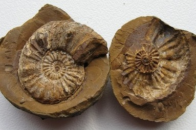 Fossielenexpeditie Maasvlakte